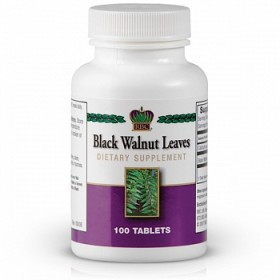 Black-Walnut-Leaves-(1395)m