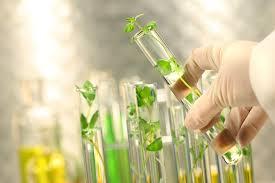 Grüne Chemie als Reinigung für Ihr Zuhause